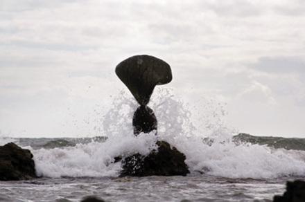 沙滩动物奇石图片