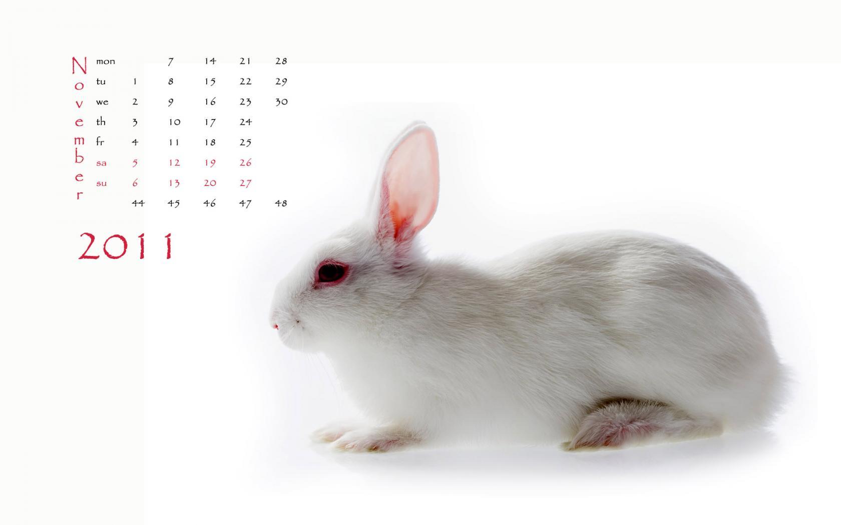 可爱兔子新年壁纸 2011兔年月历壁纸